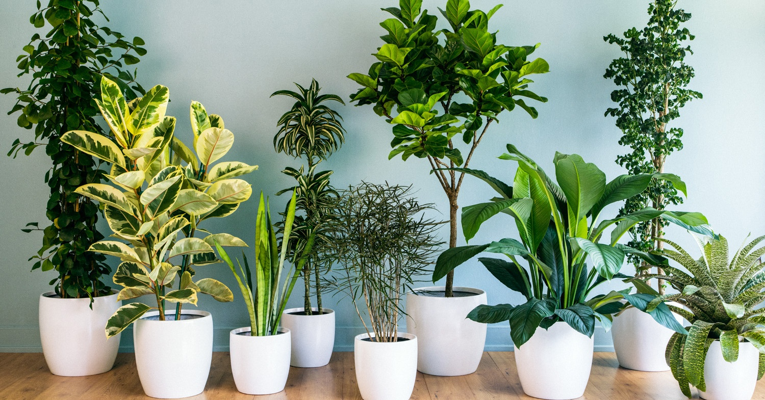 Go Green Plantshop Ae Delivers Plants To Your Doorstep Insydo